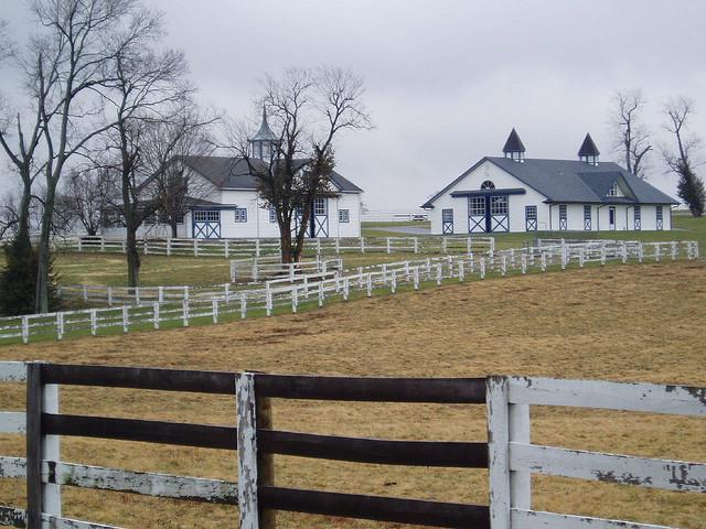 Keeneland horse farm 2