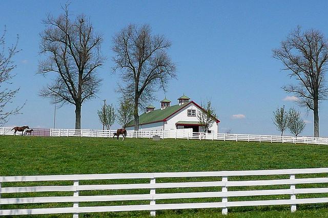 Keeneland horse farm 5
